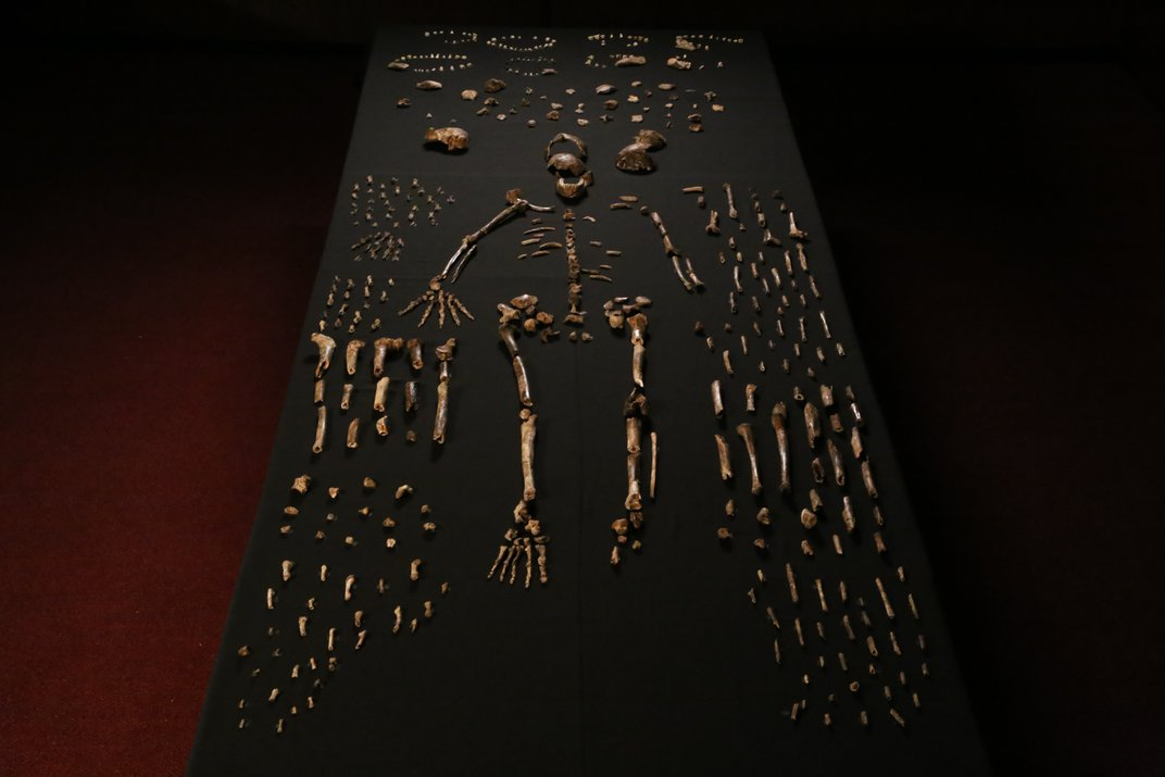 Early human skeleton laid out on a dark table.