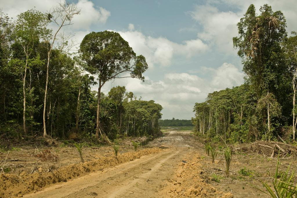Did Deforestation Contribute to Zika's Spread?