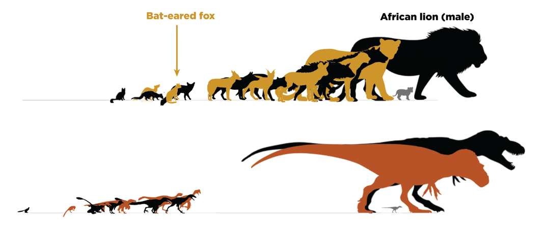 Why Medium-Sized Dinosaurs Are Often Missing From the Fossil Record