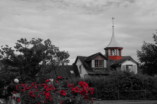 The rose garden thumbnail