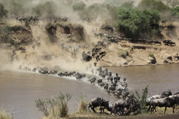 The Great Migration thumbnail