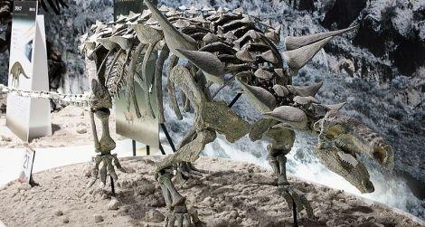 The nodosaur Animantarx