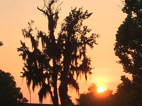 The wetlands sunset Louisiana thumbnail