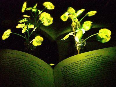 Scientists bioengineer living plants to emit light.