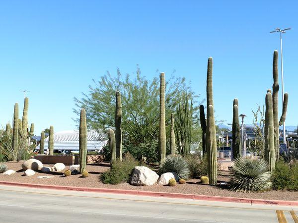 Saguara at Tucson International Airport thumbnail