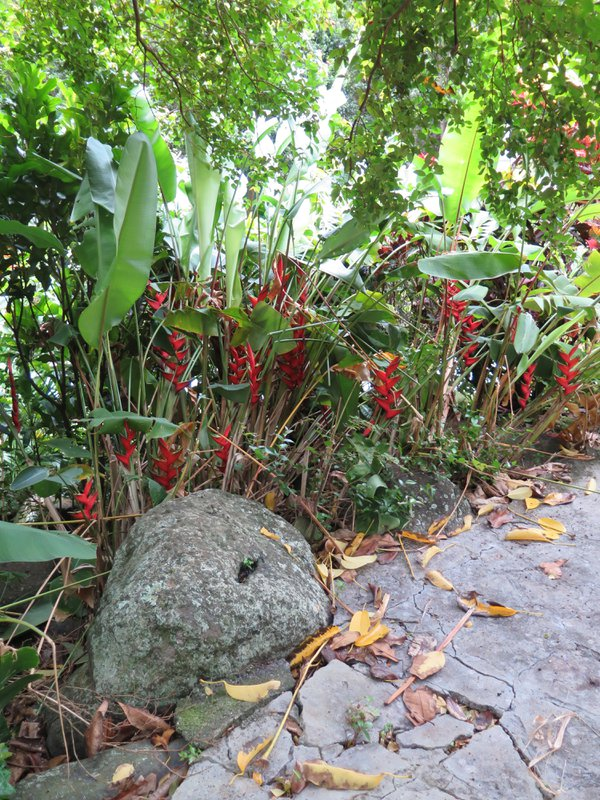 Colorful heliconia and stonework set off a section of Iao State Park on Maui, Hawaii. thumbnail