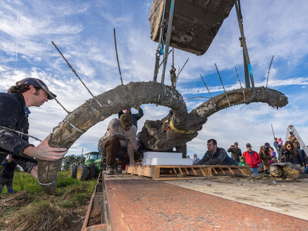 Mammoth dig2.JPG