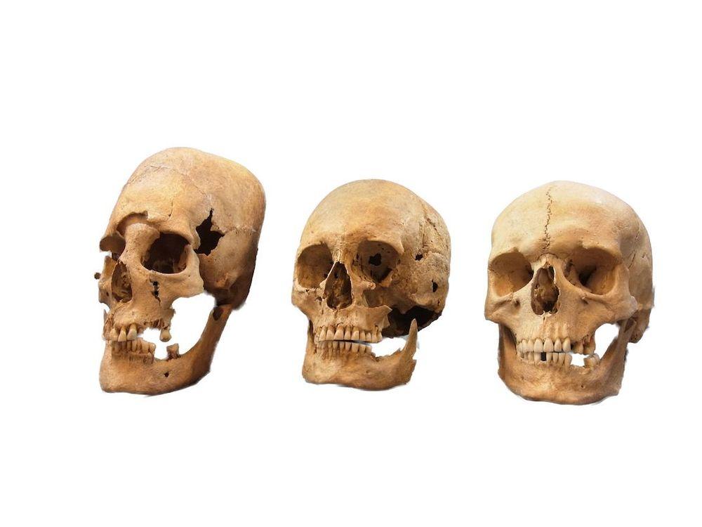Skulls_ACD.jpg