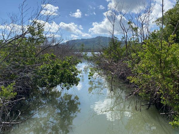 Mangrove Forest Vieques, PR thumbnail