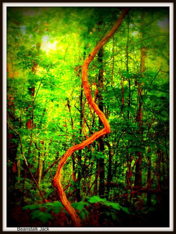 Beanstalk Jack   thumbnail