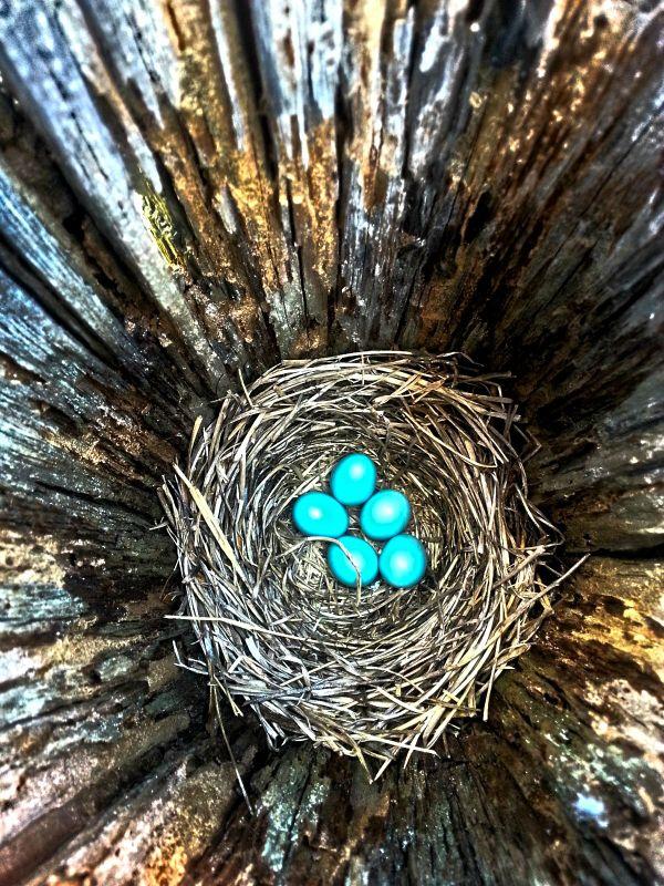 Fence Post Nest thumbnail