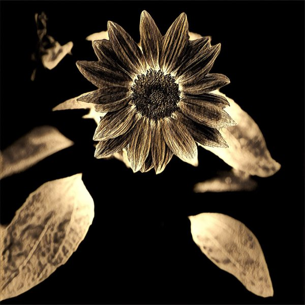 RetroSunflower thumbnail