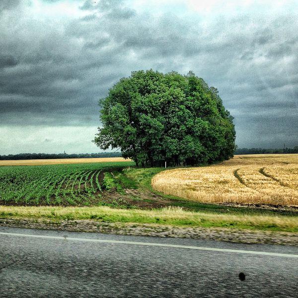 Green & yellow crops thumbnail