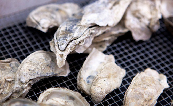Ancient Oyster Shells Are Windows to the Past