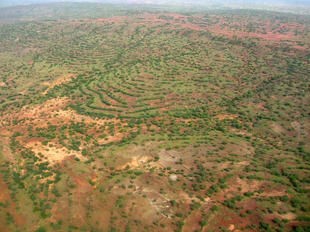 """The """"Great Green Wall"""" Didn't Stop Desertification, but it Evolved Into Something That Might"""