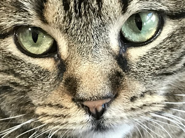 Closeup of my tiny cat Ella thumbnail