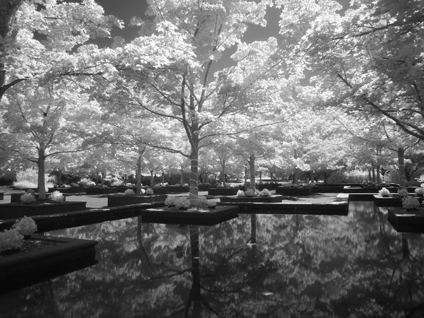 Bosque with reflecting pools.   thumbnail
