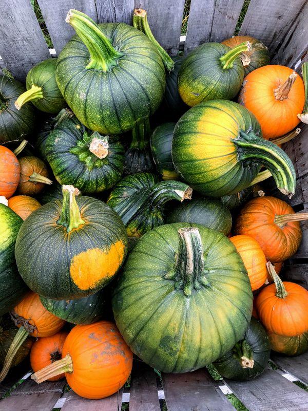 Pallet of Pumpkins thumbnail