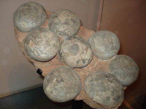 20110520083151dinosaur-eggs-flickr-300x225.jpg