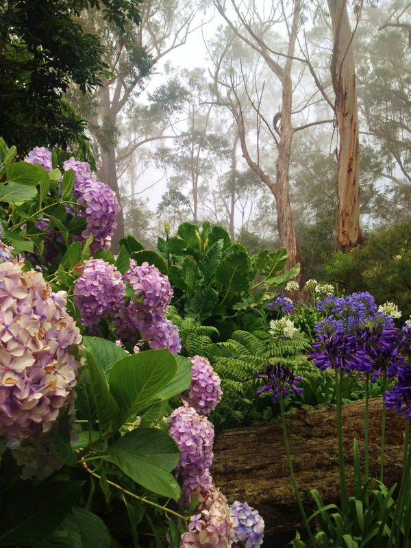 Misty garden in Springbrook National Park, Queensland, Australia thumbnail