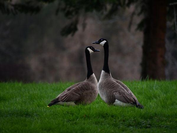 "Two ""love birds"" in the rain thumbnail"
