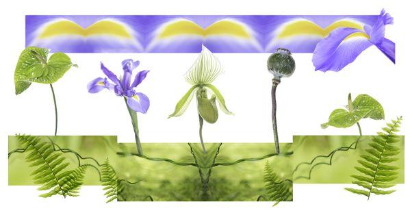 Botanical Exploration thumbnail