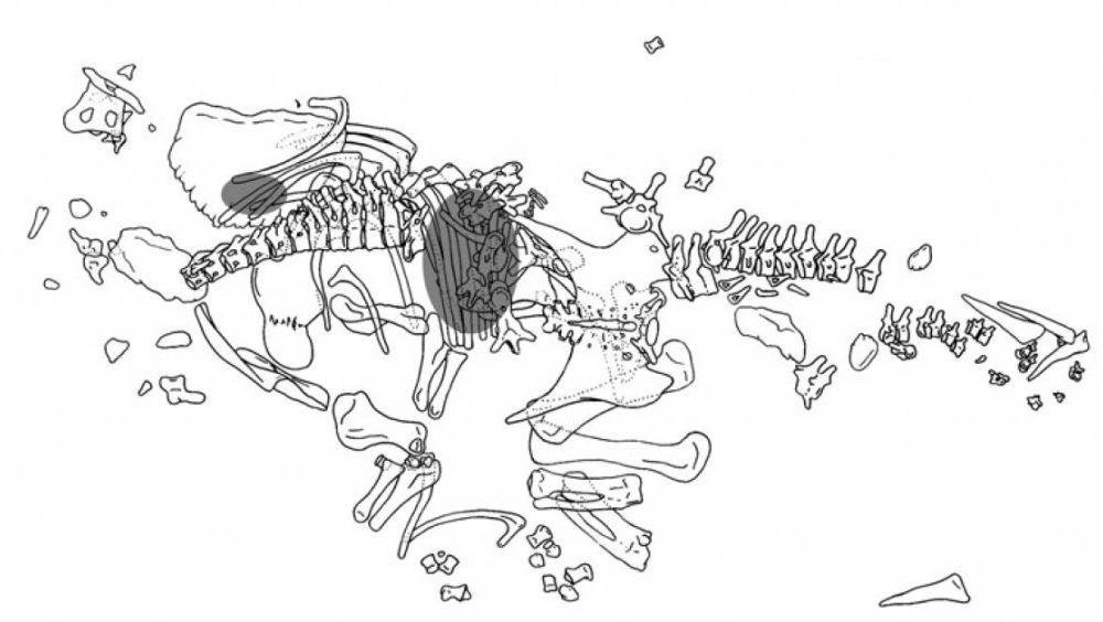 20110520083239Hesperosaurus-skeleton-1024x564.jpg