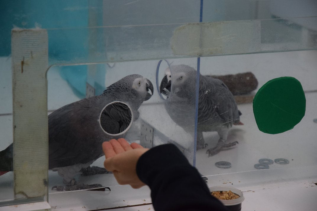 Parrots Will Share Currency to Help Their Pals Purchase Food