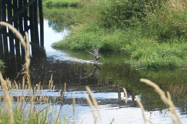 Bird in the Pond thumbnail