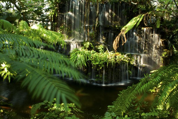 Jungle waterfall thumbnail