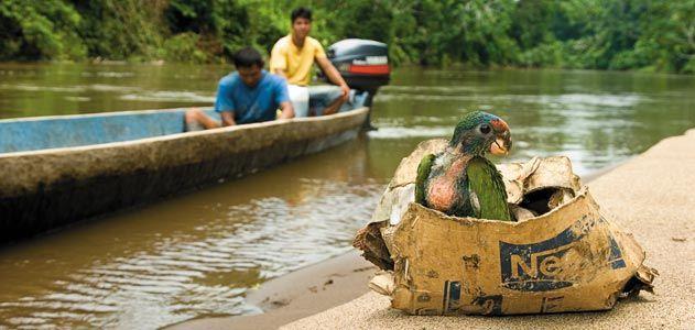 Ecuador wilderness animal trade