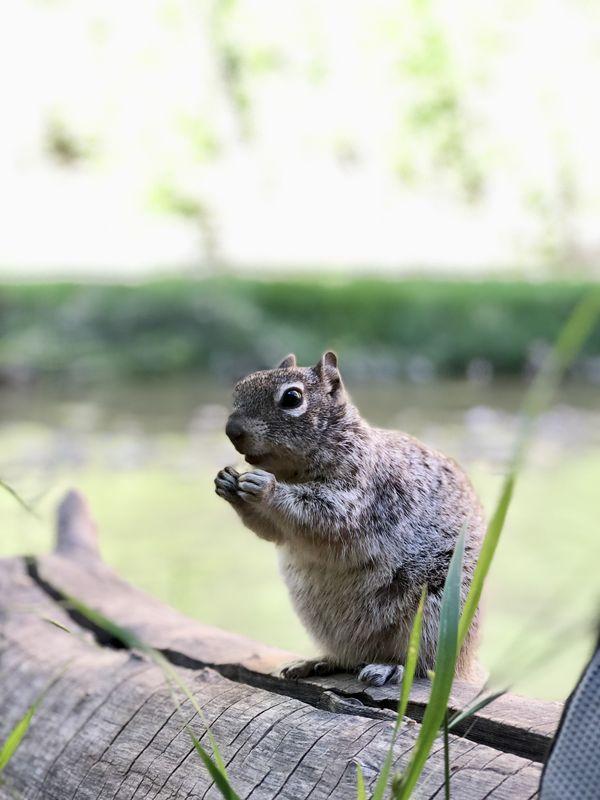 Smart squirrels in Utah thumbnail