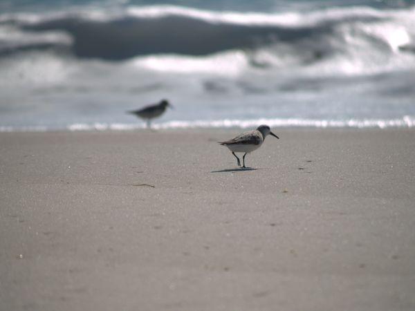 Bird at beach thumbnail