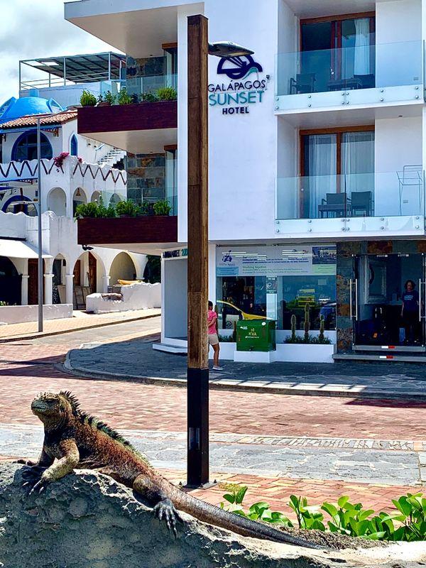 An Iguana in San Cristobal thumbnail