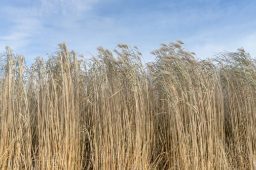 The Next Generation of Biofuels Could Come From These Five Crops