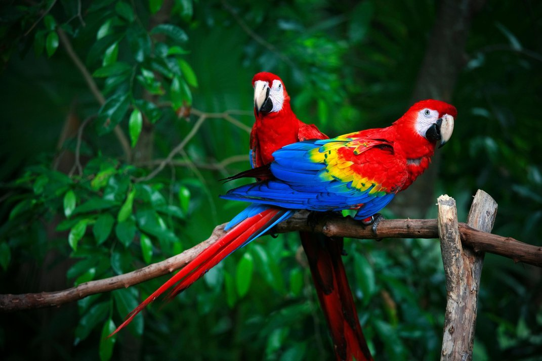 14 Fun Facts About Parrots