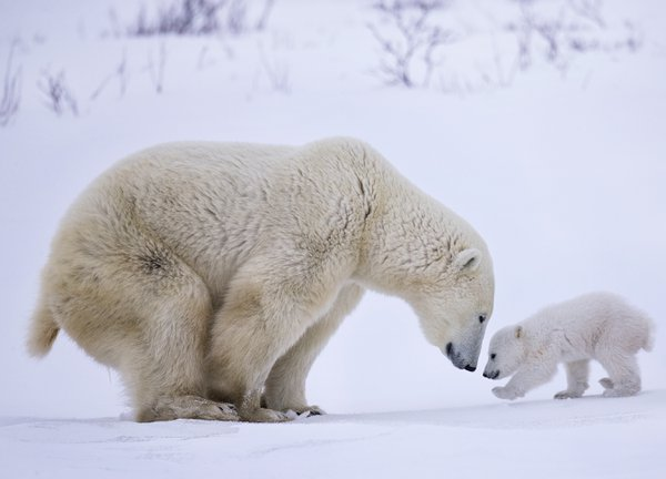 Mother and Cub thumbnail