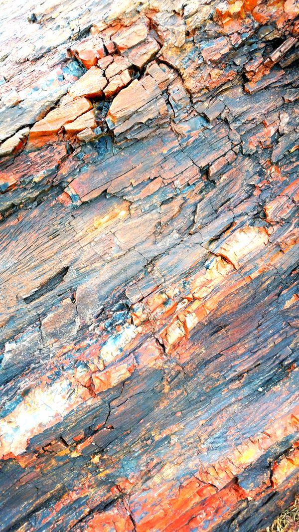 Petrified Wood thumbnail