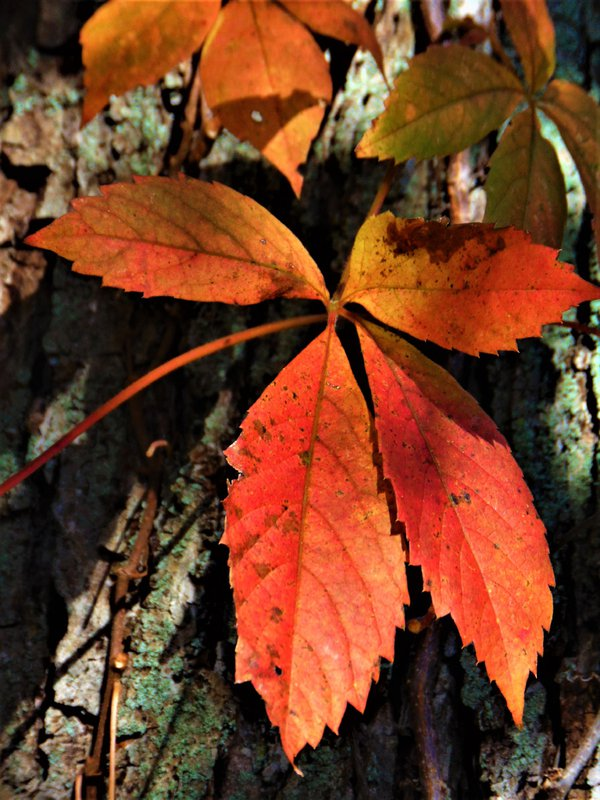 Changing Of The Leaves thumbnail