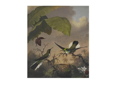 Martin Johnson Heade, Black-eared Fairy, ca. 1863-1864, oil on canvas, 12 1/4 x 10 in. Crystal Bridges Museum of American Art, Bentonville, Arkansas, 2006.89. Photography by Dwight Primiano.