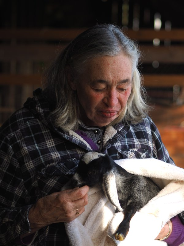 Caring for baby goat thumbnail