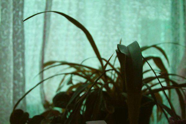 Lost Plant thumbnail