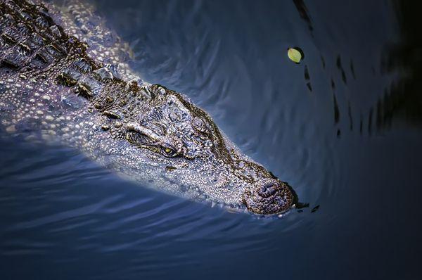 crocodile thumbnail