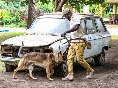 A Canines for Conservation handler and his dog inspect a vehicle as a part of a 12-week training course.