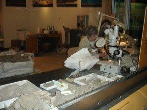 20110520083128smithsonian-fossil-prep-300x225.jpg