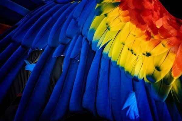 Macaw thumbnail