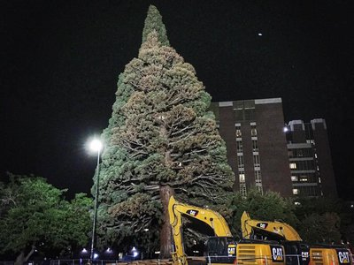 The big tree being prepared for its move in Boise, Idaho.