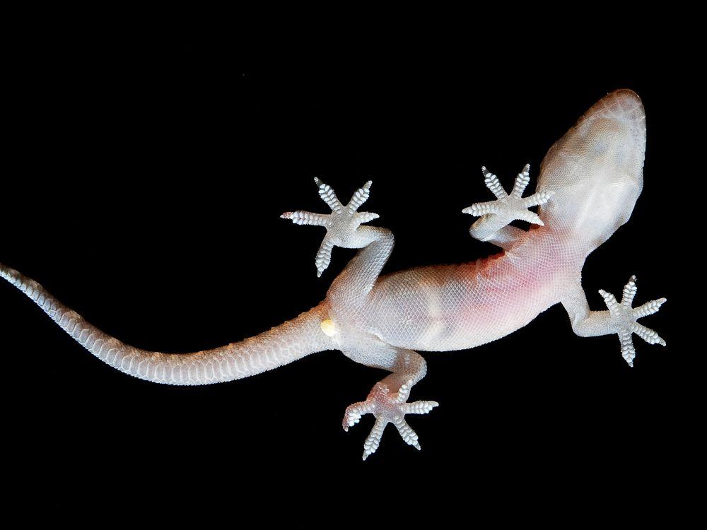 Gecko Glass