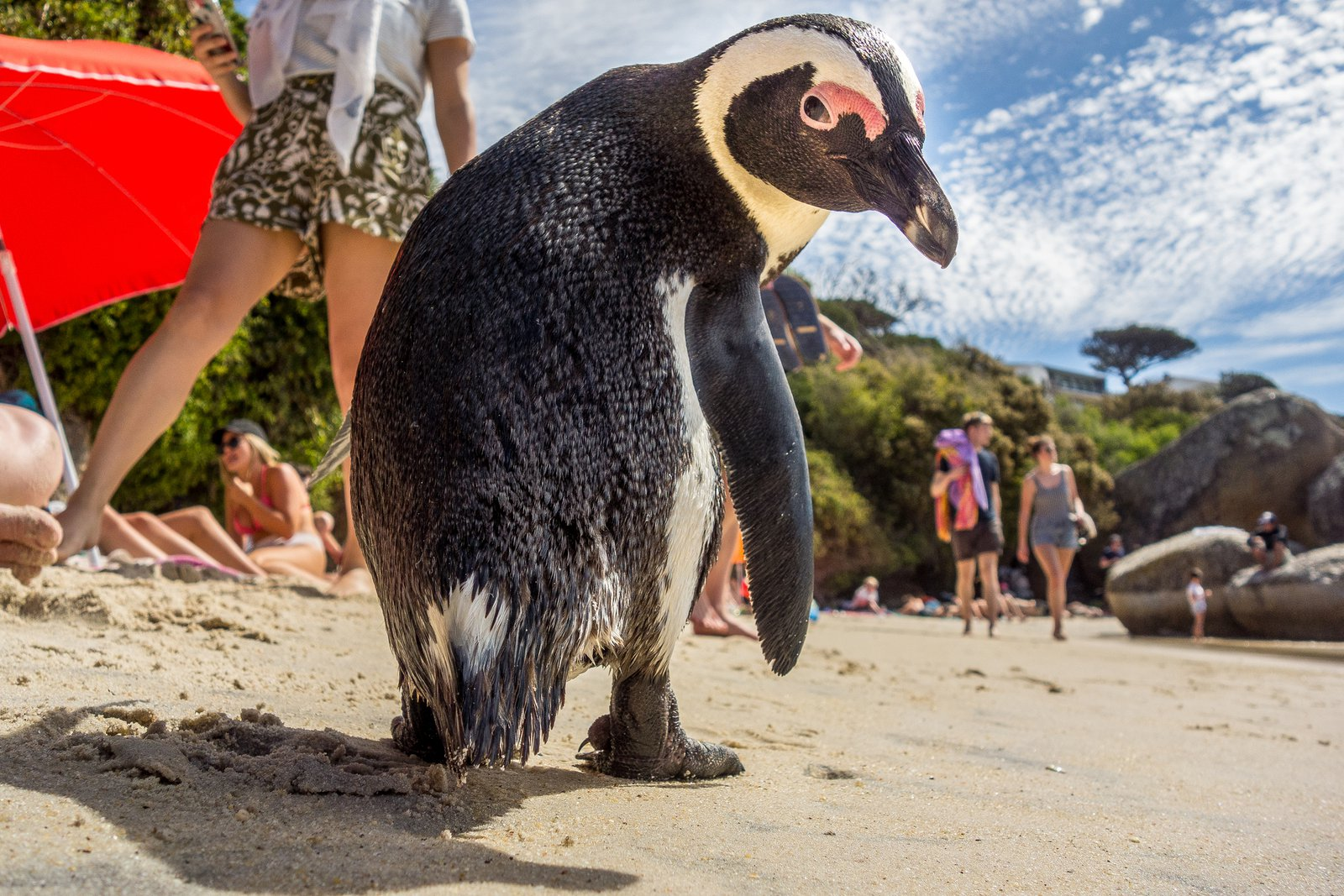The South African Town Where Penguins Rule