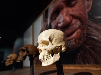 When human men mated with Neanderthal women a hundred thousand years ago, Neanderthals inherited the human Y chromosome.